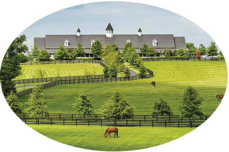 KY Colonels - Bourbon Horse Farm Tour